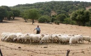 pecore e pastore-foto massimo locci