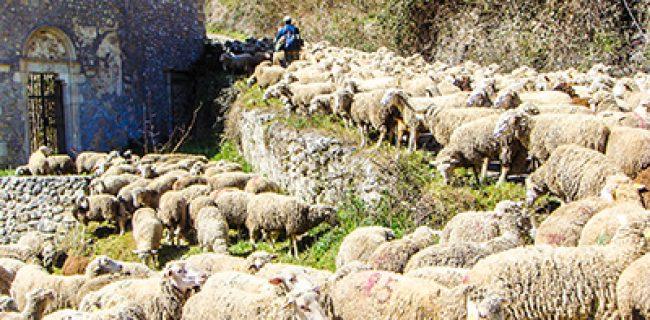 Ebbe compassione: erano come pecore senza pastore
