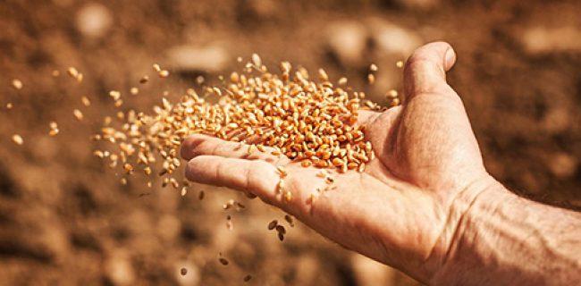 Quello seminato sul terreno buono è colui che ascolta la Parola